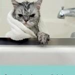 Chronique : Patte de velours, œil de lynx